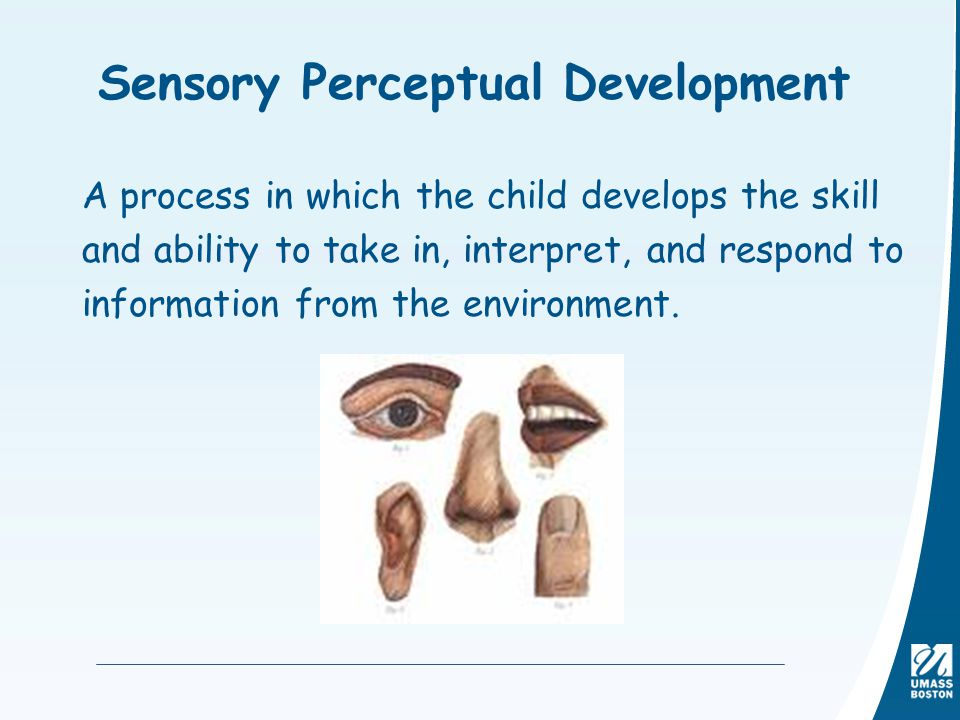 perceptual development essay B) assess the way in which such studies help to explain the development of perception (12 marks) in the following essay i intend to describe two studies of perceptualdevelopment i then intend to assess such studies and how they help to explain the development of perception by perceptual development, i mean how animals and humans [.