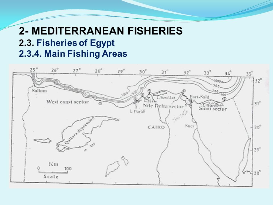 2- MEDITERRANEAN FISHERIES 2. 3. Fisheries of Egypt 2. 3. 4