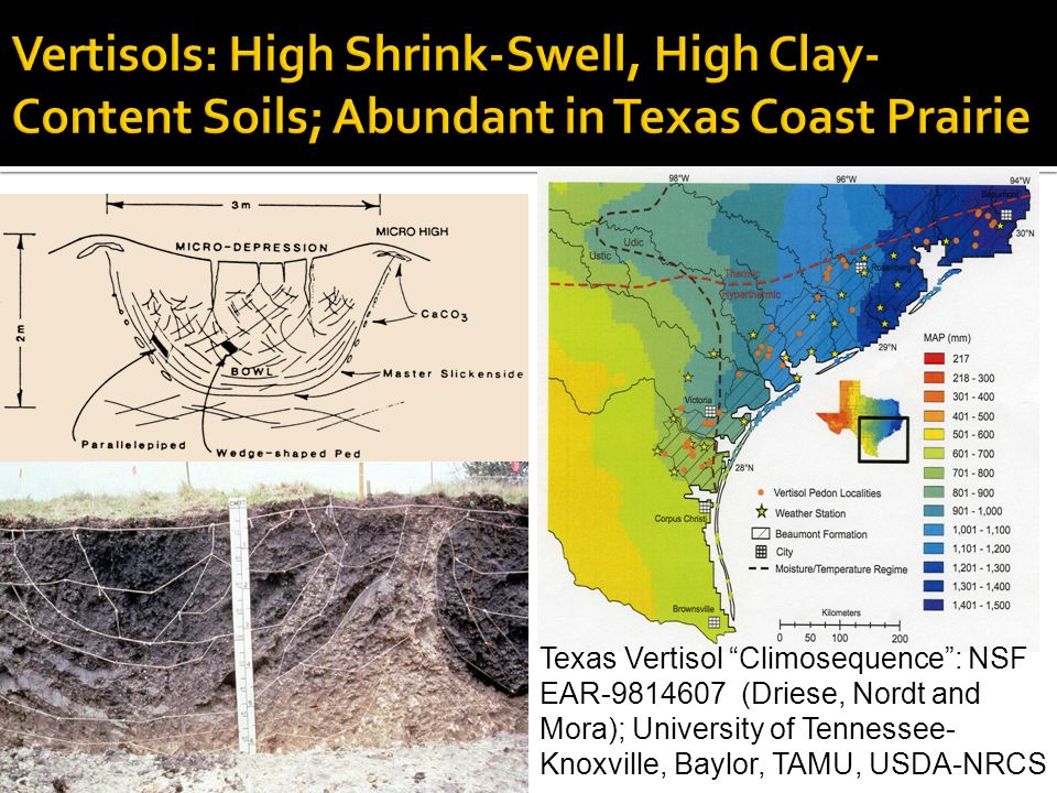 Vertisols: High Shrink-Swell, High Clay-Content Soils; Abundant in Texas Coast Prairie