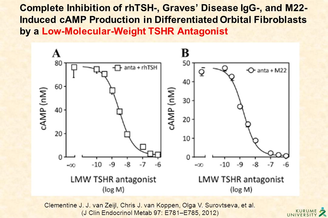 Complete Inhibition of rhTSH-, Graves' Disease IgG-, and M22-Induced cAMP Production in Differentiated Orbital Fibroblasts by a Low-Molecular-Weight TSHR Antagonist
