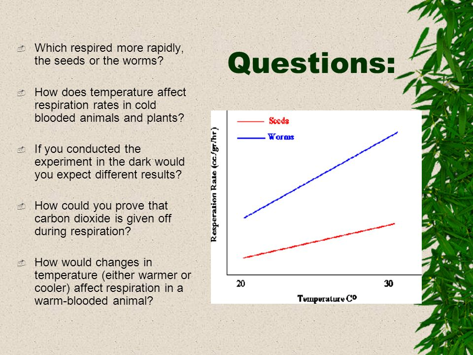 Questions: Which respired more rapidly, the seeds or the worms