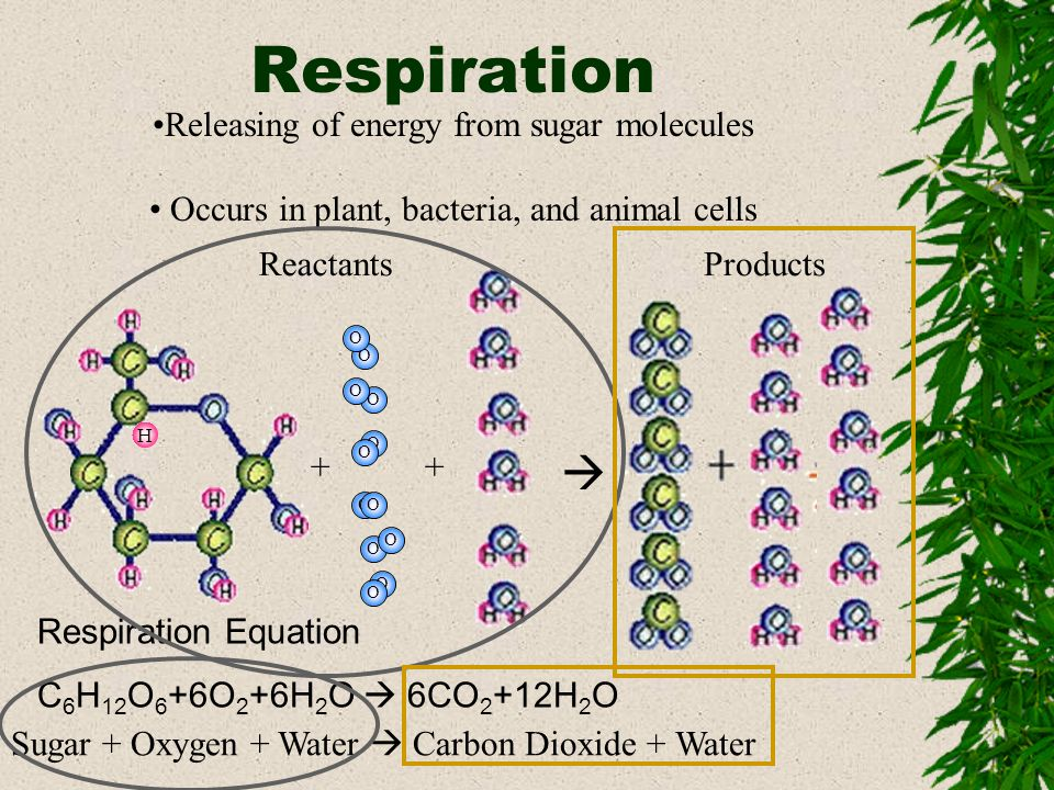 Respiration  Releasing of energy from sugar molecules