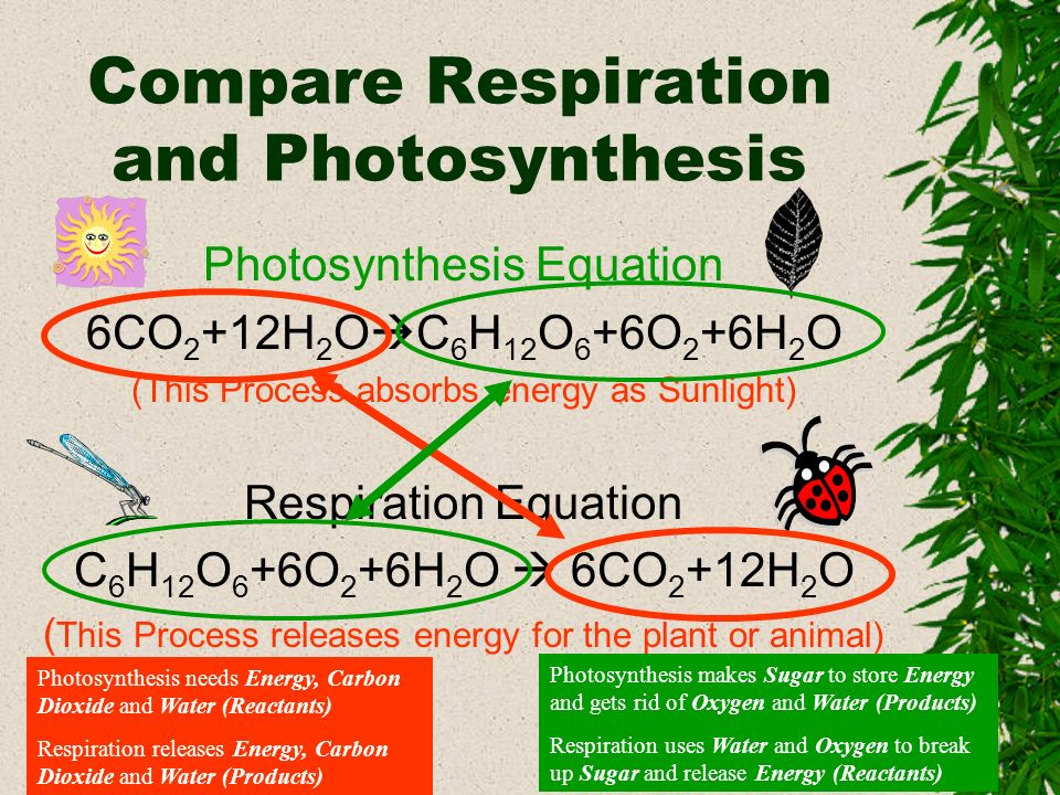 Compare Respiration and Photosynthesis