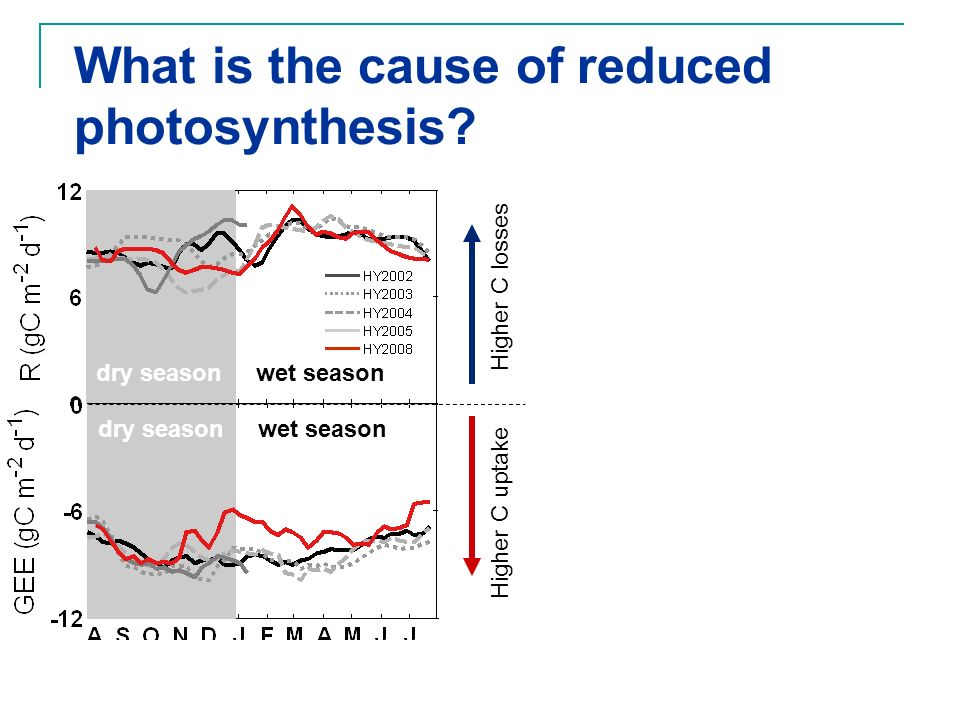 What is the cause of reduced photosynthesis