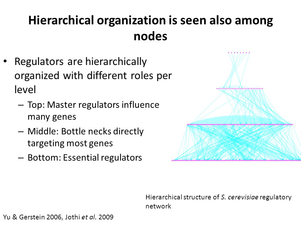 Hierarchical organization is seen also among nodes