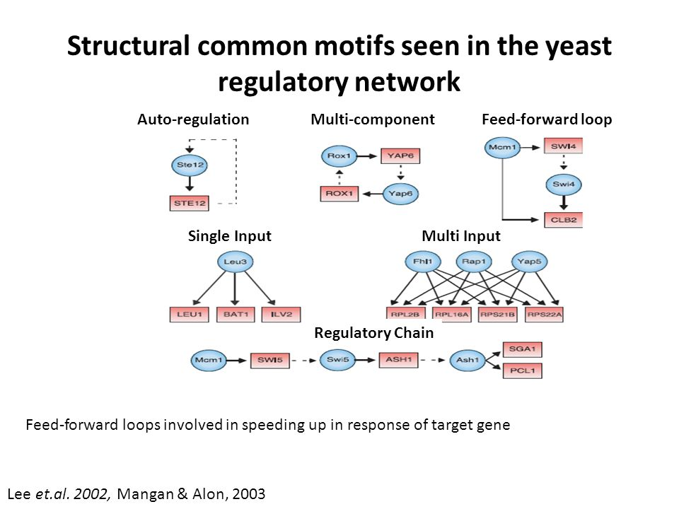 Structural common motifs seen in the yeast regulatory network