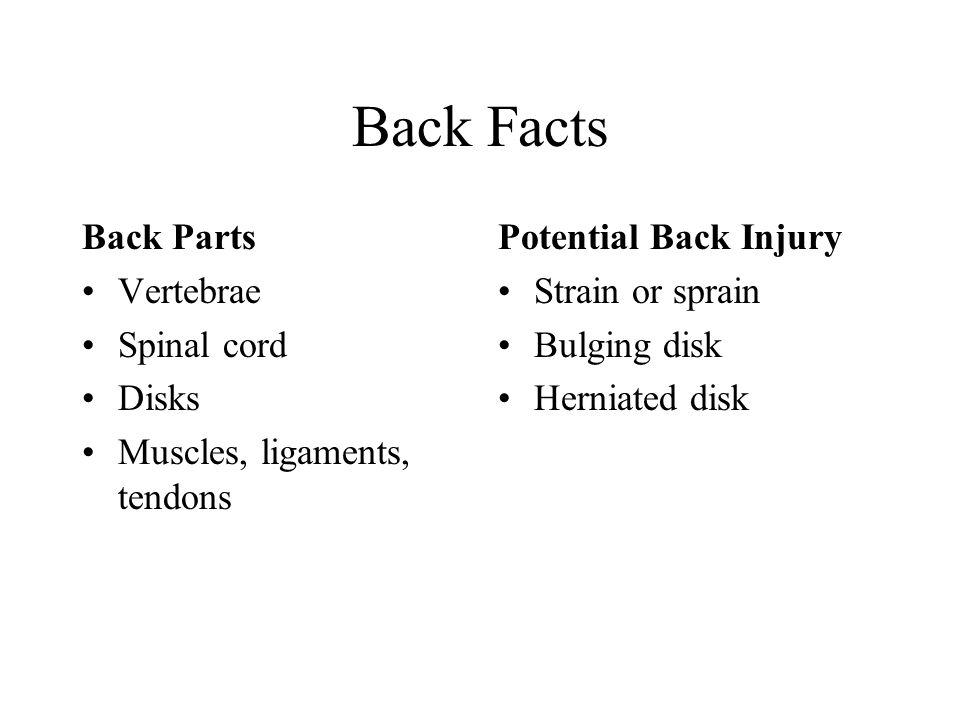 Back Facts Back Parts Vertebrae Spinal cord Disks