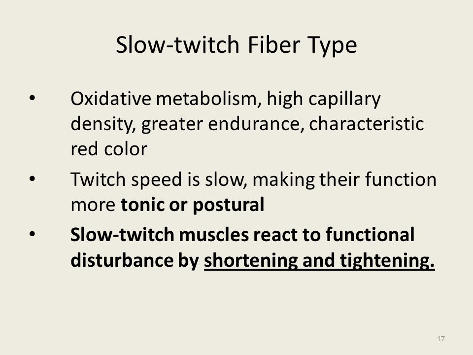 Slow-twitch Fiber Type