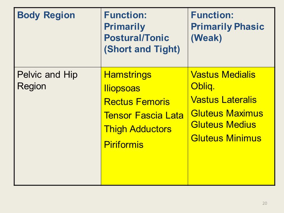 Body Region Function: Primarily Postural/Tonic (Short and Tight) Function: Primarily Phasic (Weak)