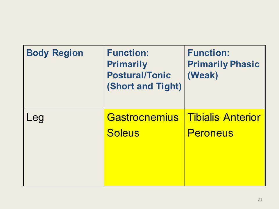 Leg Gastrocnemius Soleus Tibialis Anterior Peroneus Body Region
