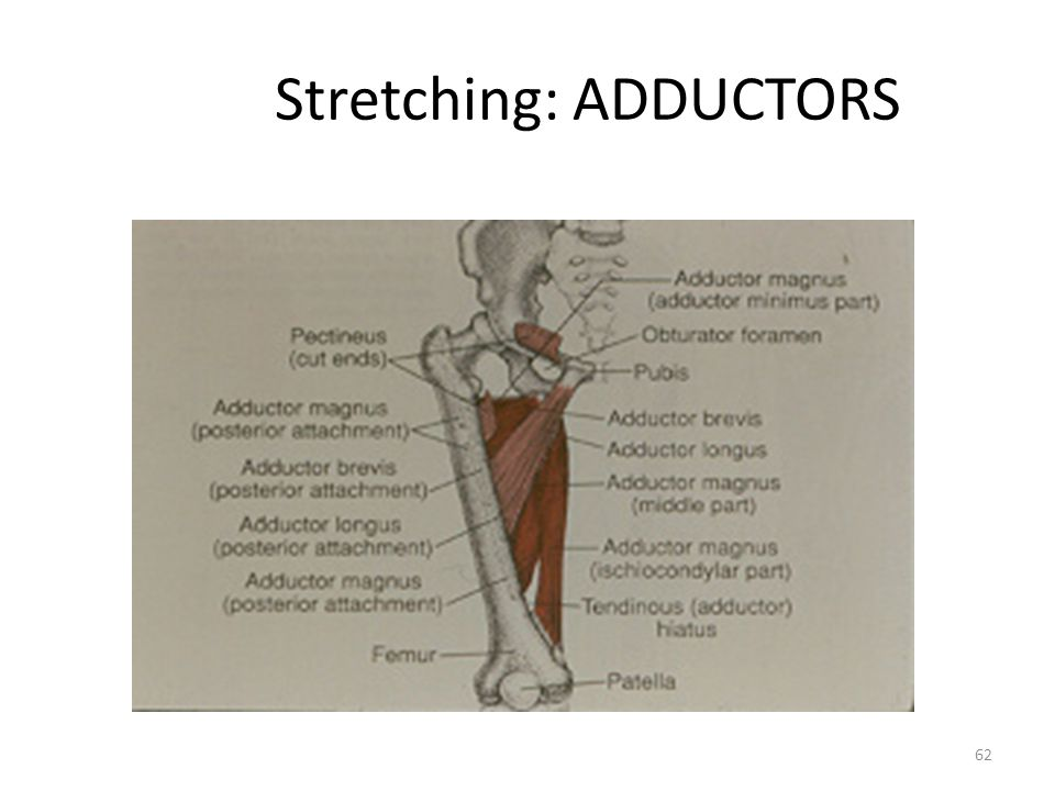 Stretching: ADDUCTORS