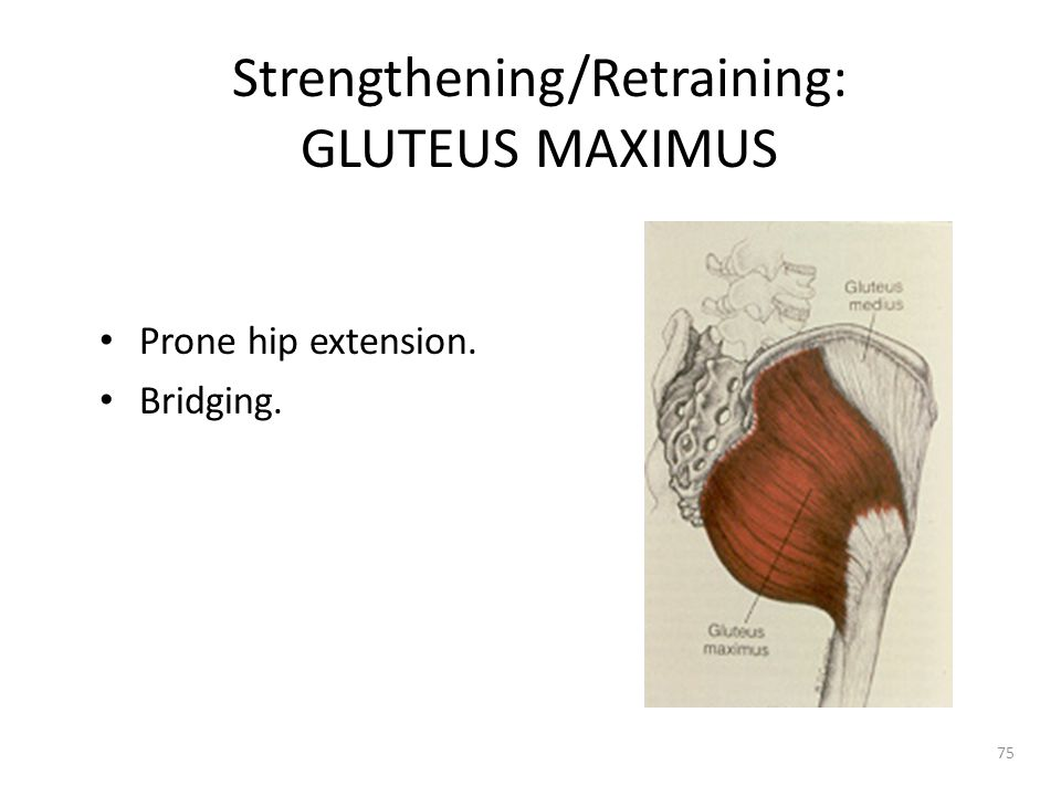 Strengthening/Retraining: GLUTEUS MAXIMUS