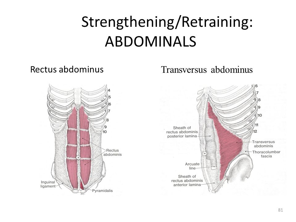 Strengthening/Retraining: ABDOMINALS