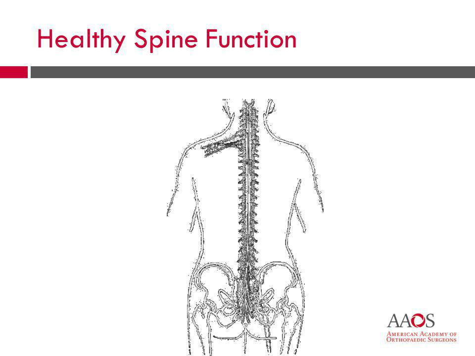 Healthy Spine Function