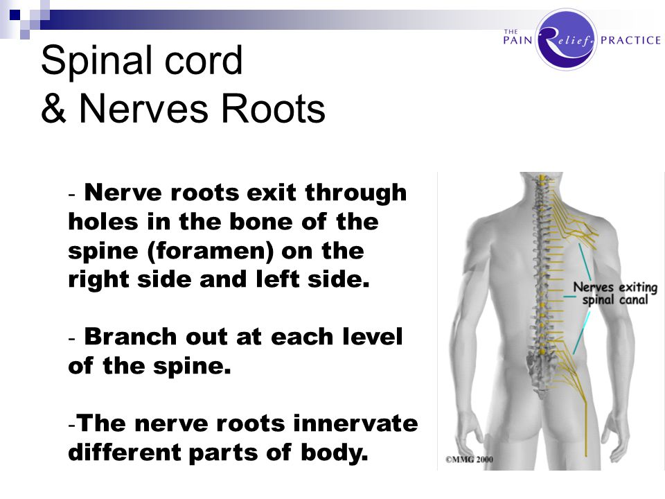 Spinal cord & Nerves Roots