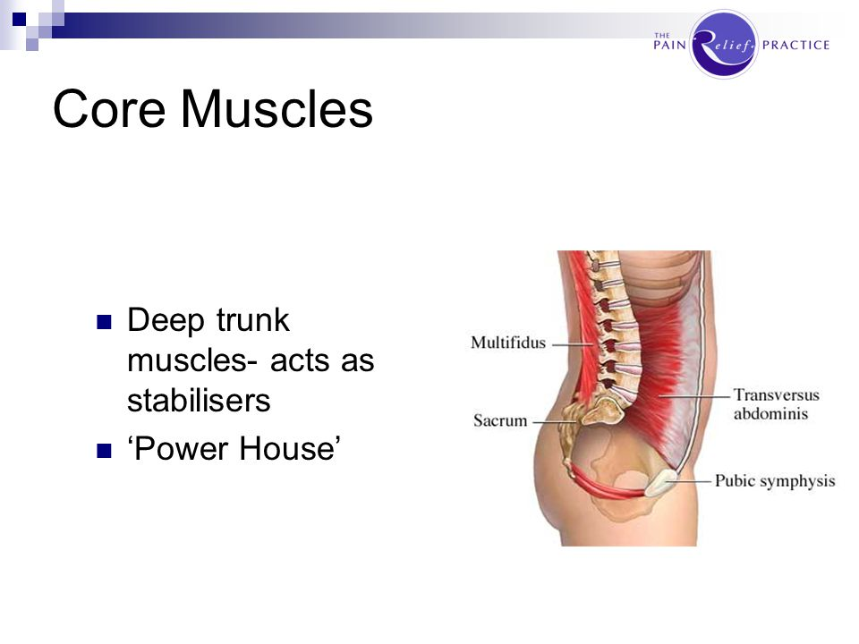 Core Muscles Deep trunk muscles- acts as stabilisers 'Power House'