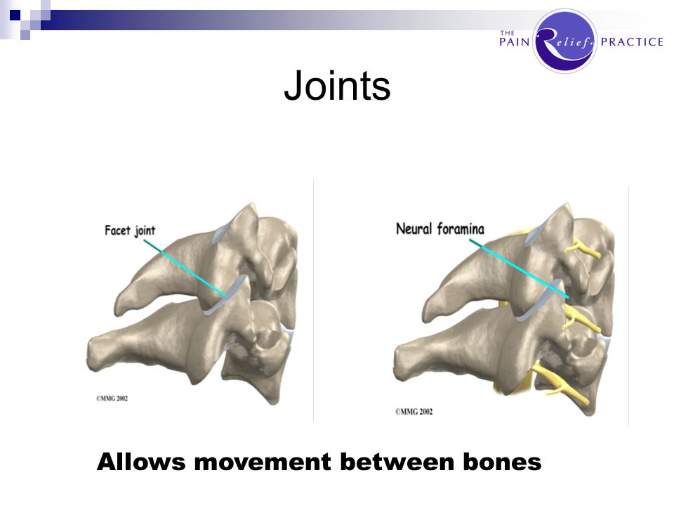Joints Allows movement between bones