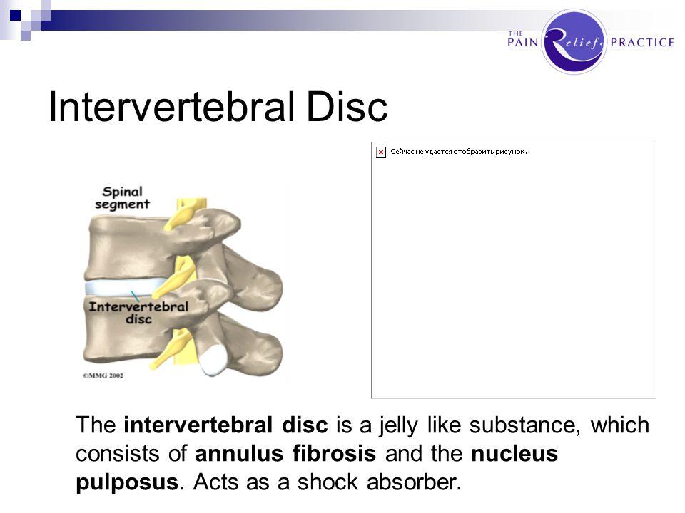 Intervertebral Disc