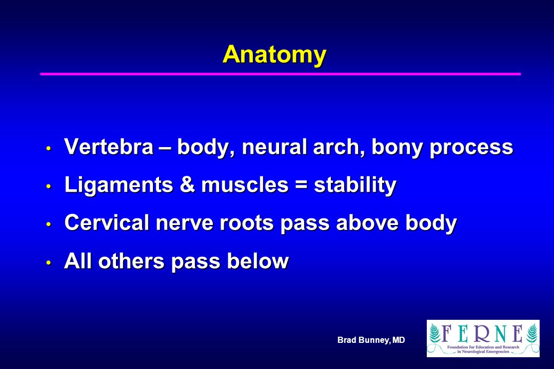Anatomy Vertebra – body, neural arch, bony process