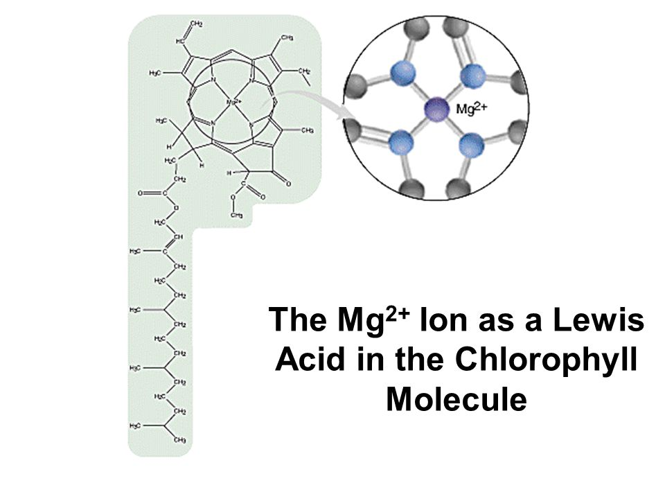 The Mg2+ Ion as a Lewis Acid in the Chlorophyll Molecule