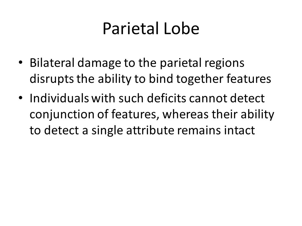 Parietal Lobe Bilateral damage to the parietal regions disrupts the ability to bind together features.