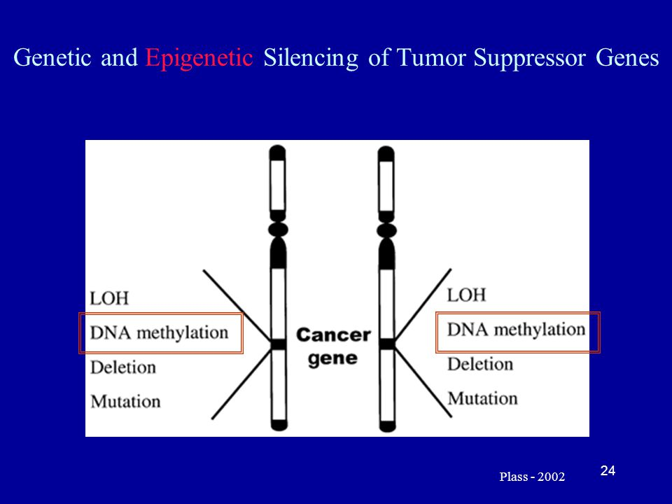 Genetic and Epigenetic Silencing of Tumor Suppressor Genes