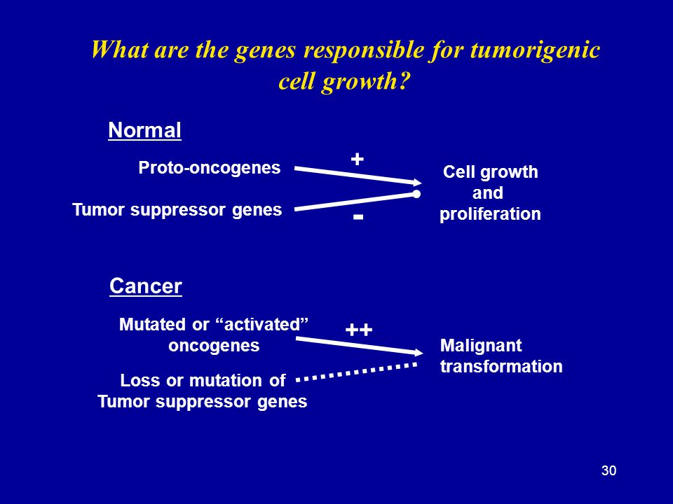 - What are the genes responsible for tumorigenic cell growth + ++