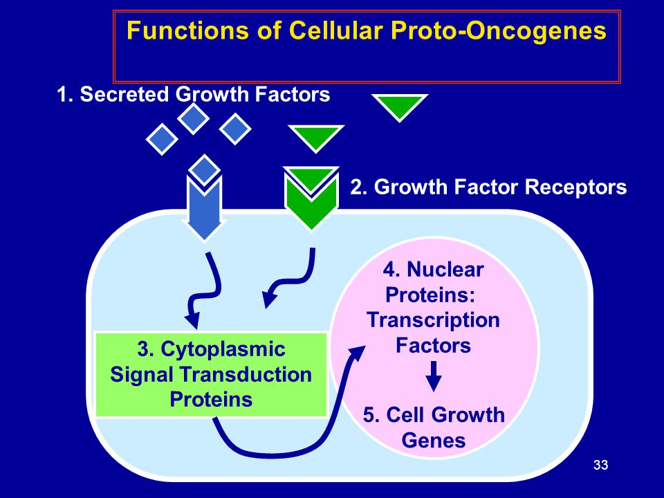Functions of Cellular Proto-Oncogenes 2. Growth Factor Receptors