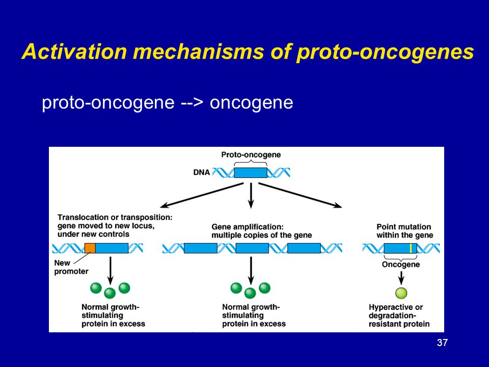 Activation mechanisms of proto-oncogenes