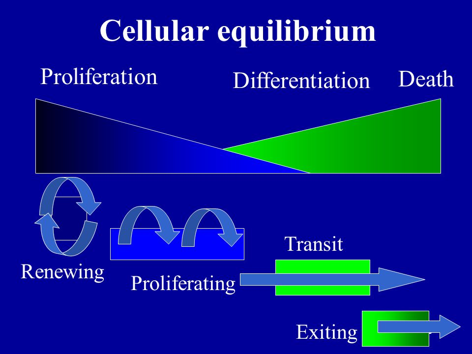 Cellular equilibrium Proliferation Death Differentiation Transit