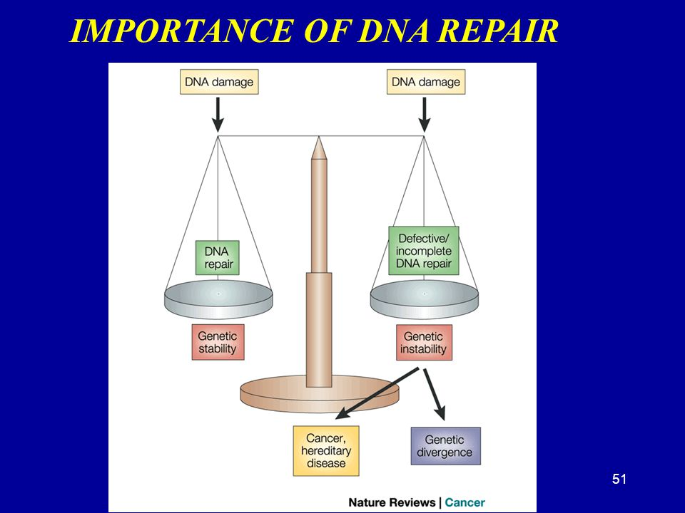 IMPORTANCE OF DNA REPAIR