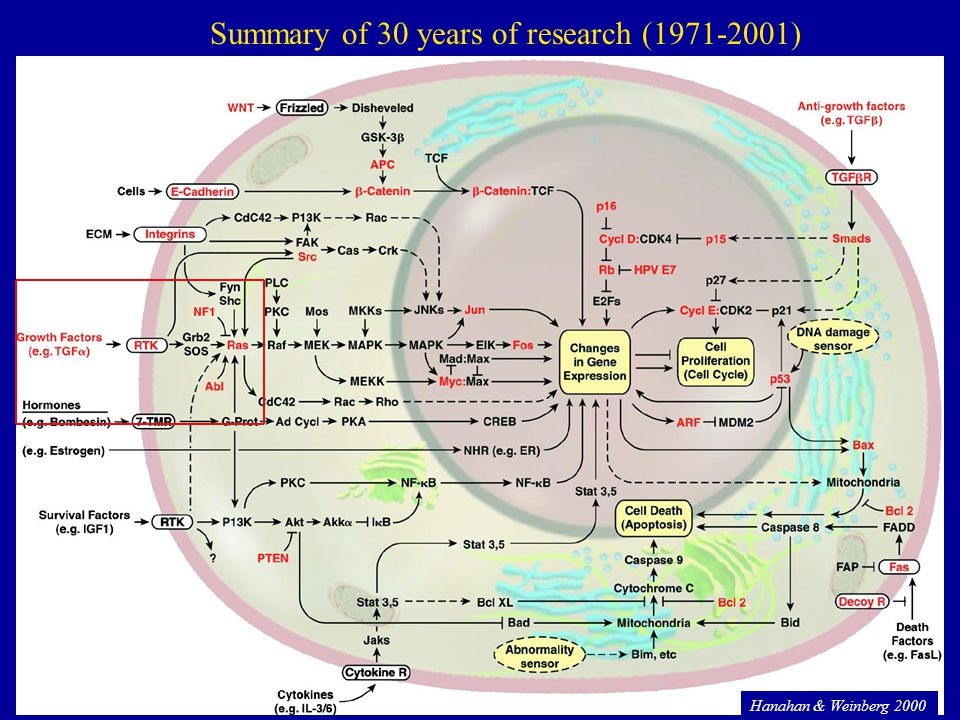 Summary of 30 years of research (1971-2001)