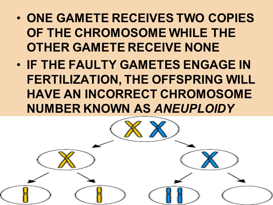 ONE GAMETE RECEIVES TWO COPIES OF THE CHROMOSOME WHILE THE OTHER GAMETE RECEIVE NONE