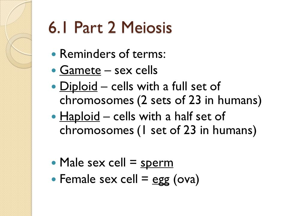 6.1 Part 2 Meiosis Reminders of terms: Gamete – sex cells