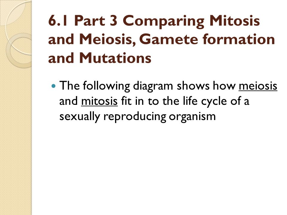 6.1 Part 3 Comparing Mitosis and Meiosis, Gamete formation and Mutations