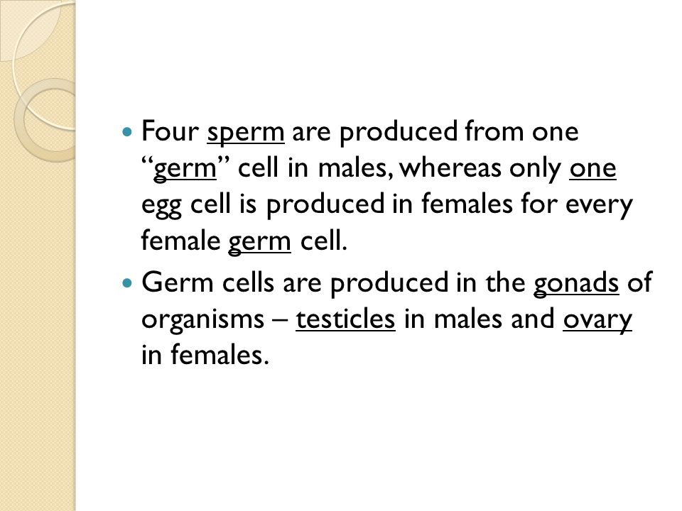 Four sperm are produced from one germ cell in males, whereas only one egg cell is produced in females for every female germ cell.