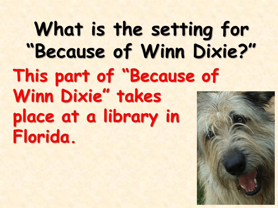 What is the setting for Because of Winn Dixie