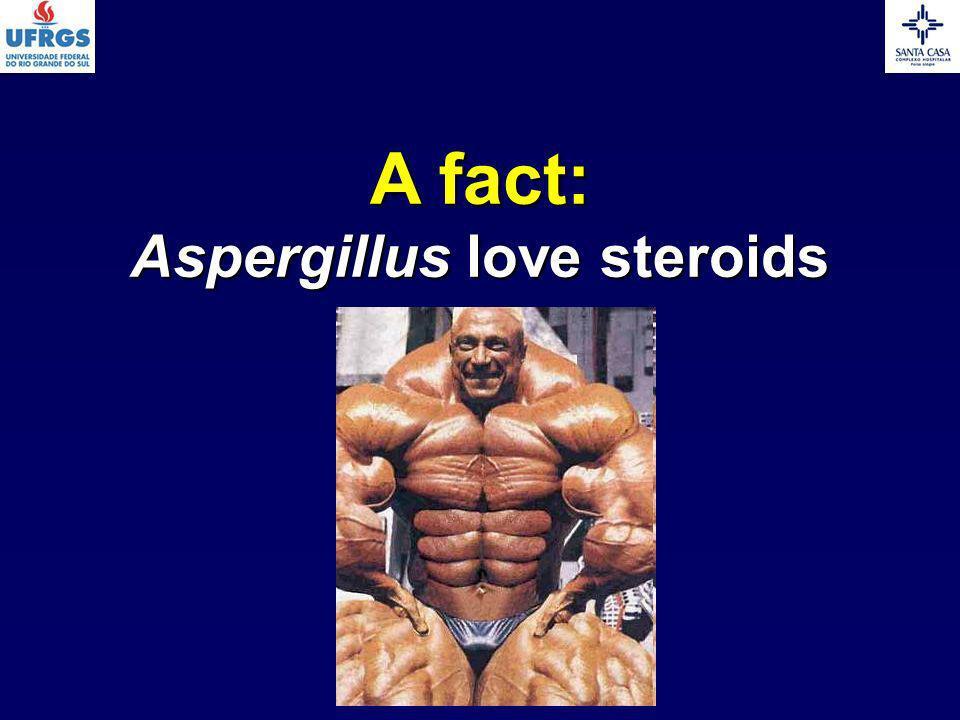 Aspergillus love steroids