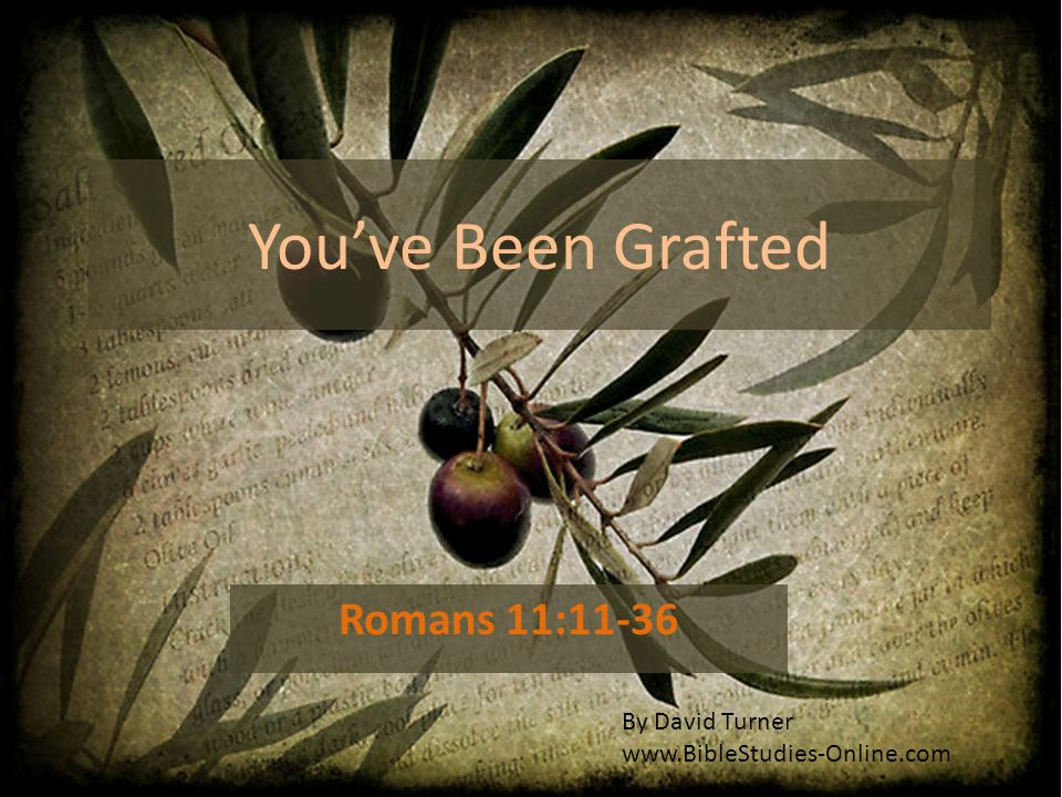 You've Been Grafted Romans 11:11-36 By David Turner