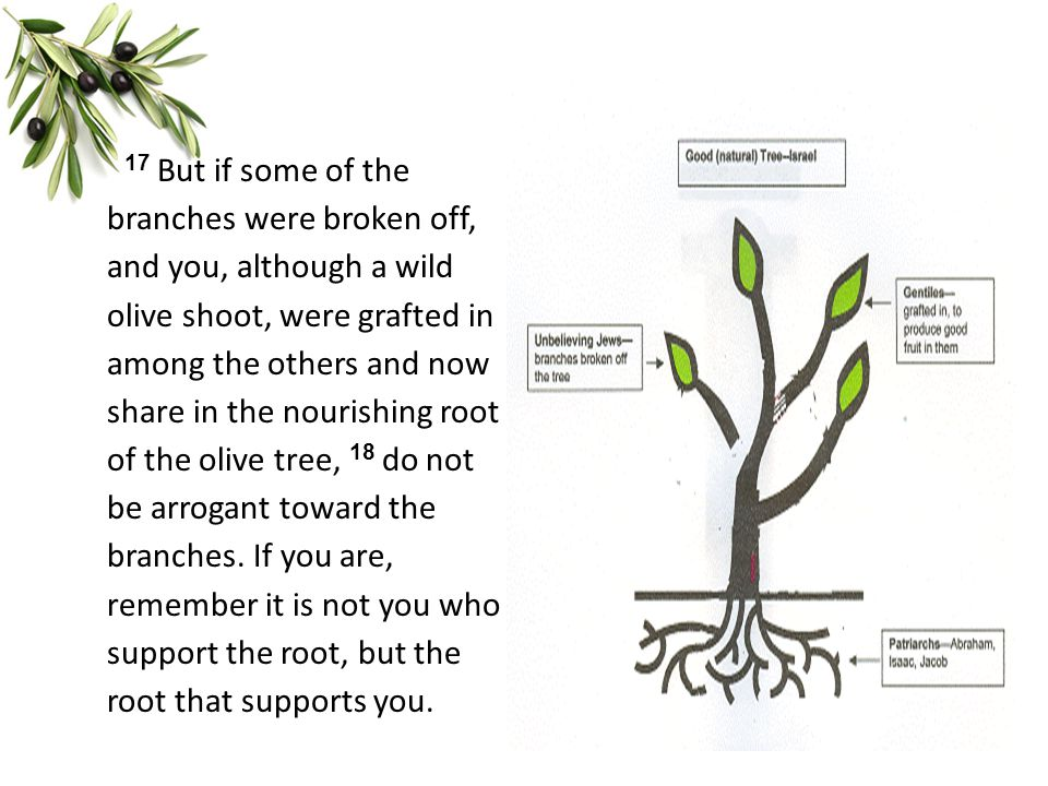 17 But if some of the branches were broken off, and you, although a wild olive shoot, were grafted in among the others and now share in the nourishing root of the olive tree, 18 do not be arrogant toward the branches.