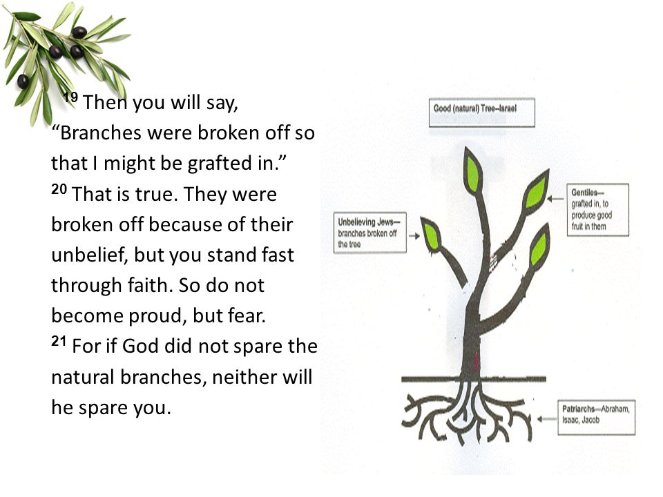 19 Then you will say, Branches were broken off so that I might be grafted in. 20 That is true.