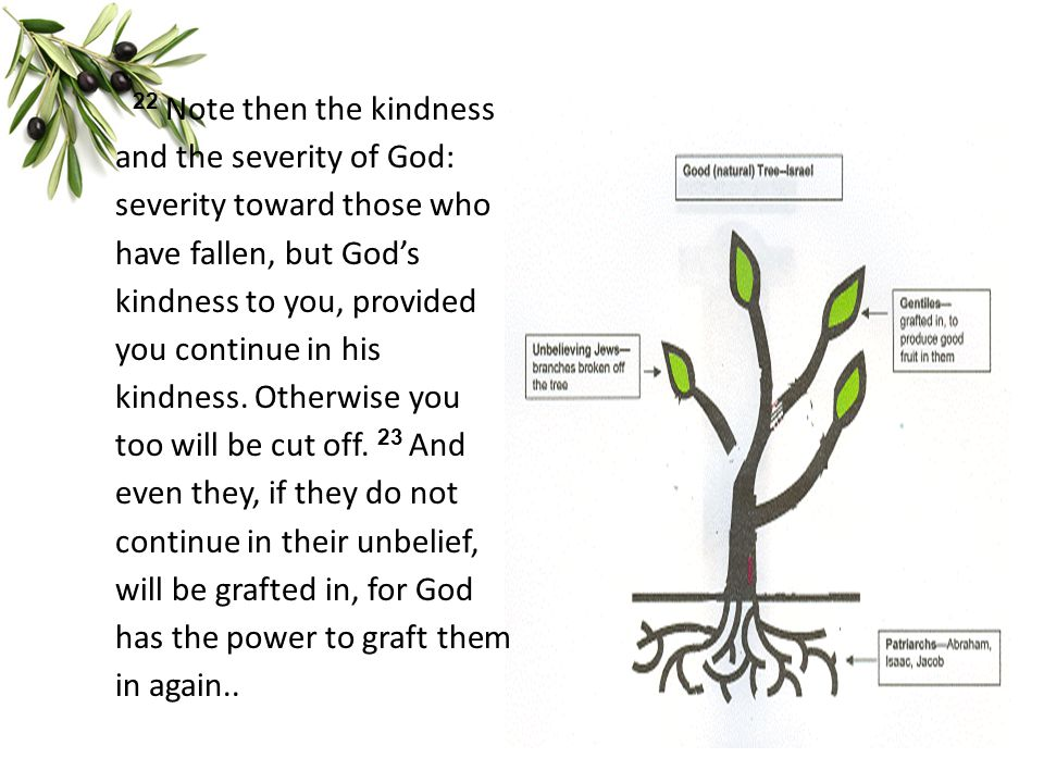 22 Note then the kindness and the severity of God: severity toward those who have fallen, but God's kindness to you, provided you continue in his kindness.