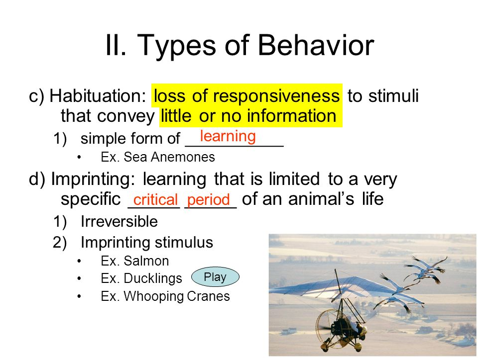 II. Types of Behavior c) Habituation: loss of responsiveness to stimuli that convey little or no information.