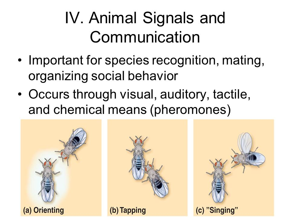 IV. Animal Signals and Communication
