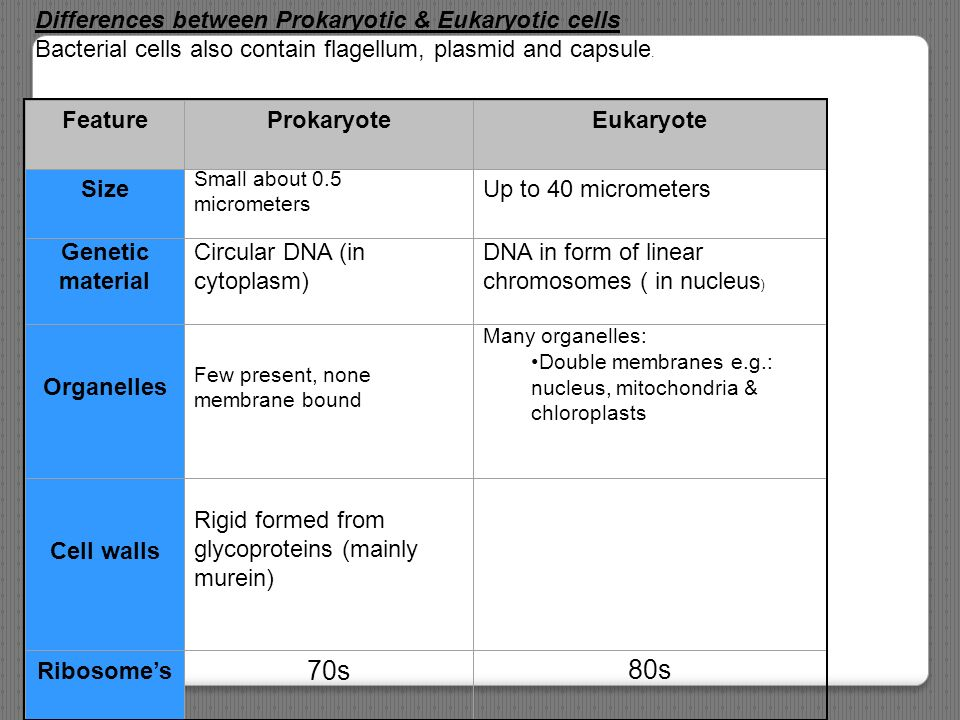70s 80s Differences between Prokaryotic & Eukaryotic cells