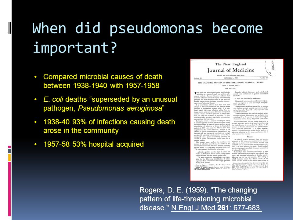 When did pseudomonas become important