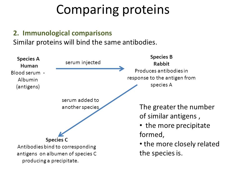Comparing proteins 2. Immunological comparisons