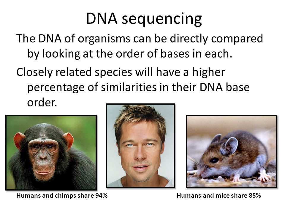 DNA sequencing The DNA of organisms can be directly compared by looking at the order of bases in each.