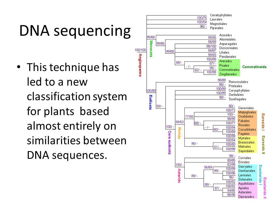 DNA sequencing This technique has led to a new classification system for plants based almost entirely on similarities between DNA sequences.