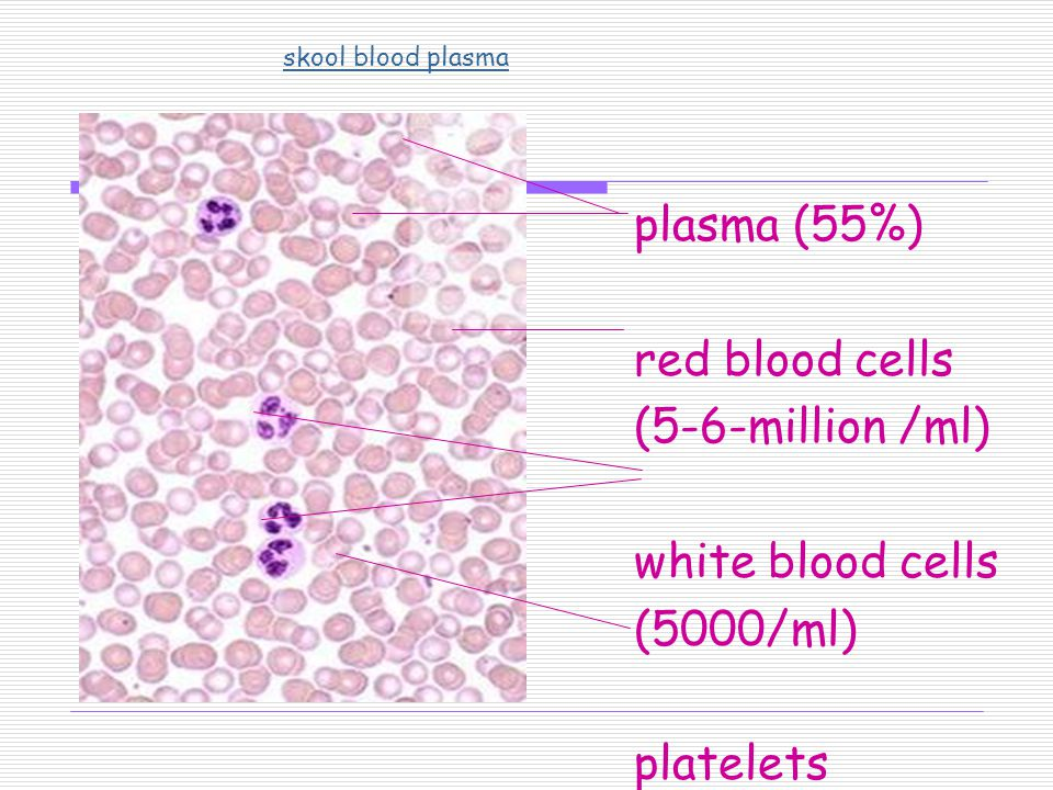 plasma (55%) red blood cells (5-6-million /ml) white blood cells